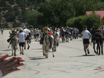 Gold Rush burro race